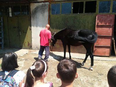 За конете и децата - Изображение 2