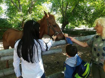 За конете и децата - Изображение 3