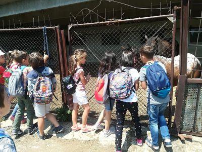 За конете и децата - Изображение 4