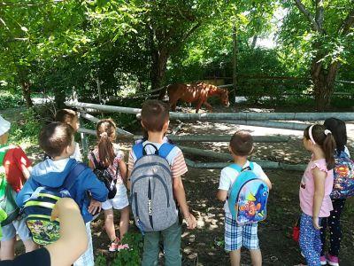 За конете и децата - Изображение 5