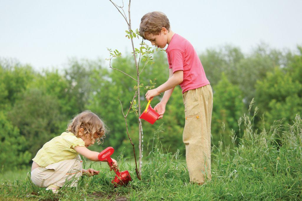 """Нашите дървета за проект """"Коменски"""" - Начален учител Милена Борисова - Плевен"""