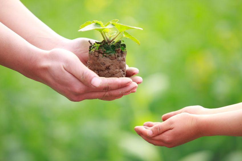 Родители в час по предприемачество - Начален учител Милена Борисова - Плевен